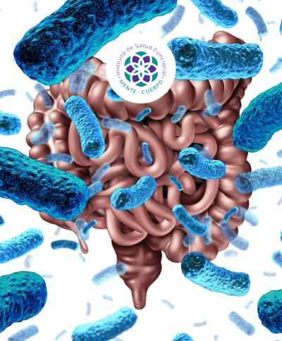 conexion-intestino-cerebro